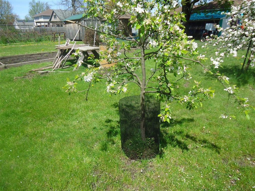 TREE GUARD PICTURES 2 001 (Medium)
